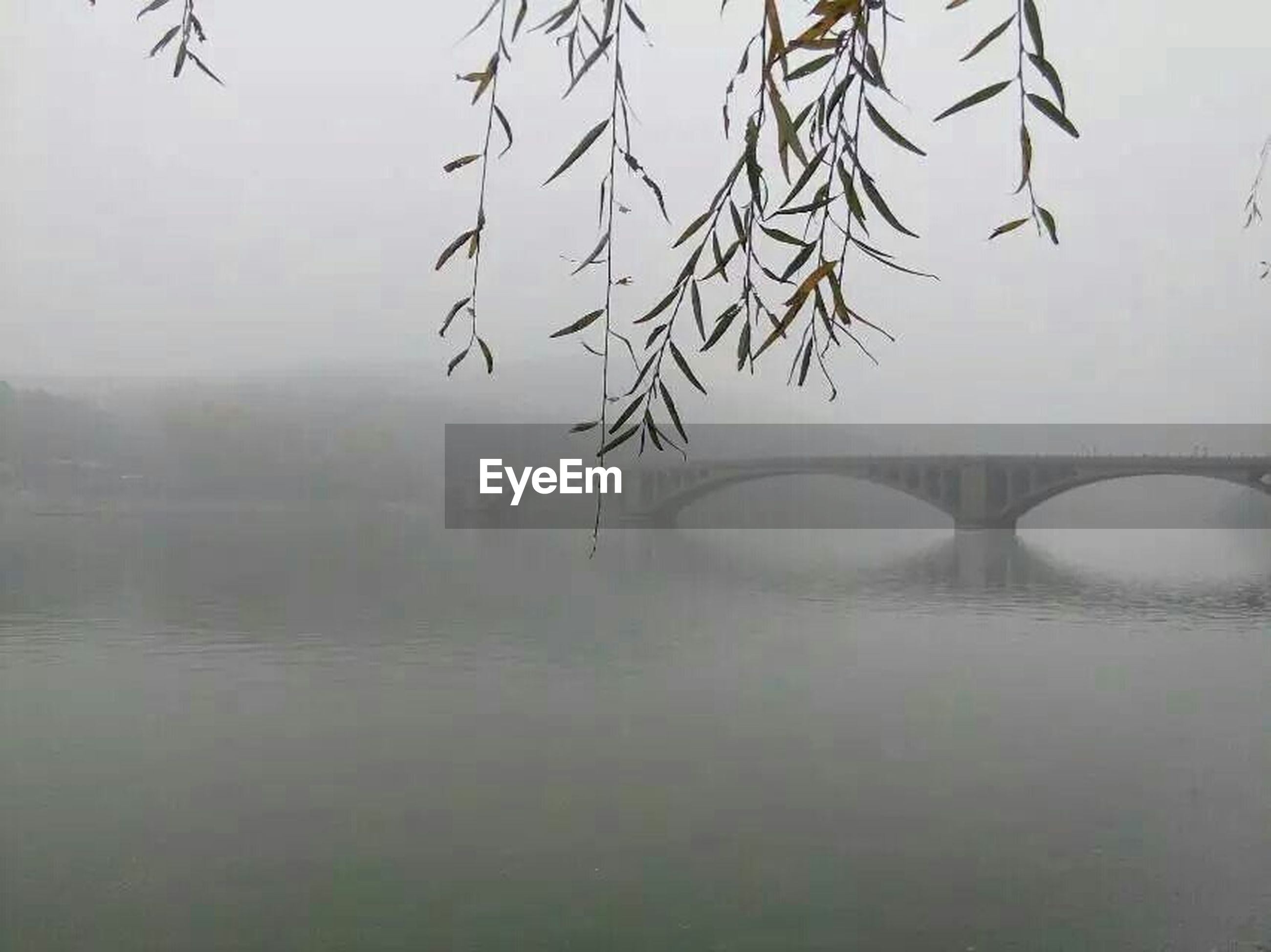 water, fog, reflection, weather, foggy, indoors, nature, waterfront, lake, season, tranquility, built structure, tree, branch, bare tree, day, transparent, no people, wet, glass - material