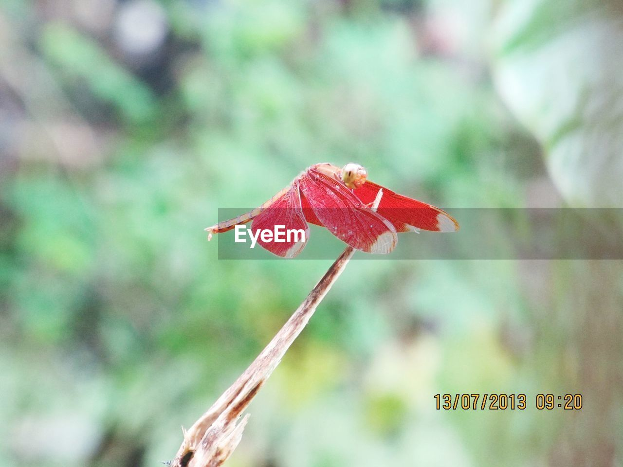 nature, growth, red, day, focus on foreground, close-up, fragility, beauty in nature, outdoors, no people, plant, flower, flower head, freshness