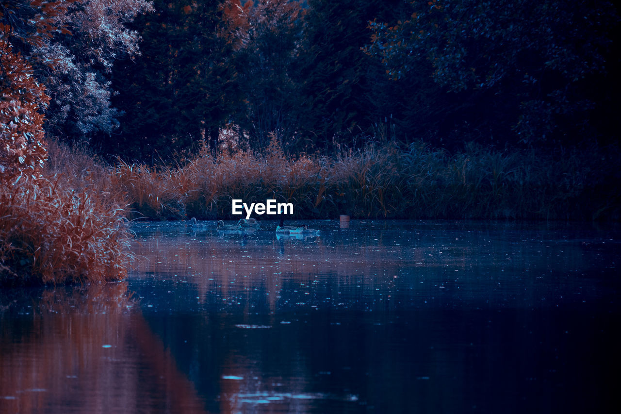 water, reflection, tree, waterfront, lake, plant, nature, no people, tranquility, beauty in nature, tranquil scene, scenics - nature, growth, night, outdoors, forest, non-urban scene, idyllic