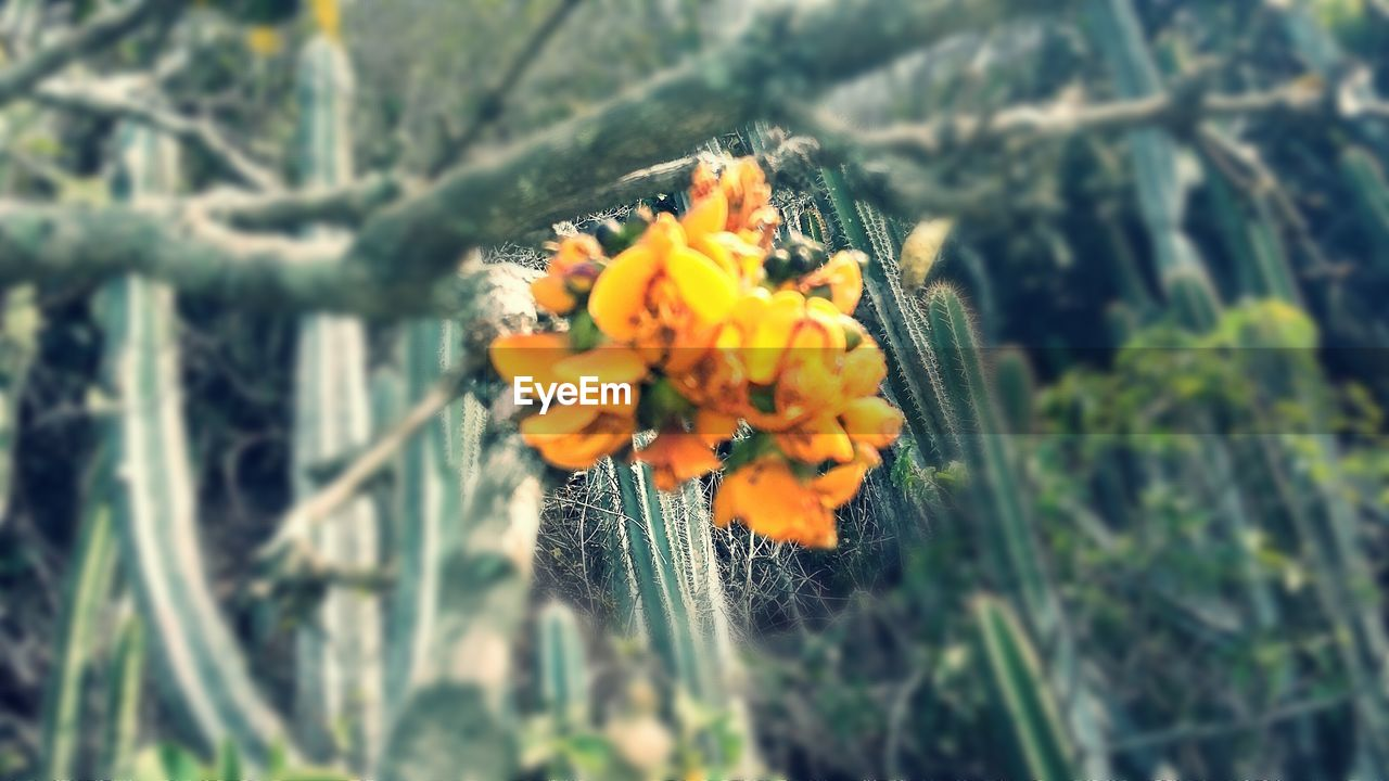 nature, growth, flower, plant, beauty in nature, fragility, freshness, day, no people, outdoors, close-up, petal, flower head