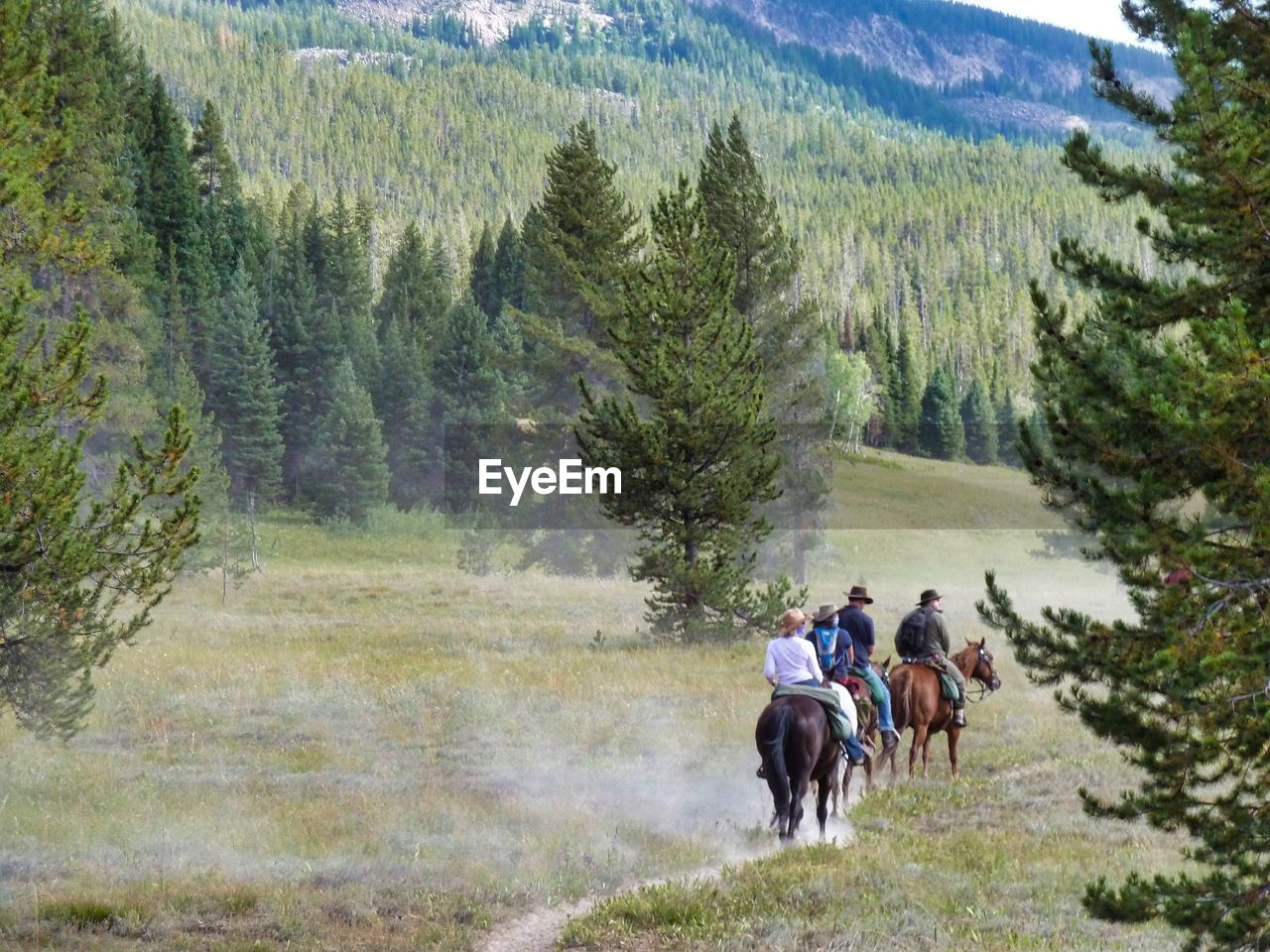 plant, tree, horse, men, mammal, animal wildlife, activity, mountain, livestock, domestic, domestic animals, real people, riding, nature, horseback riding, day, ride, land, outdoors