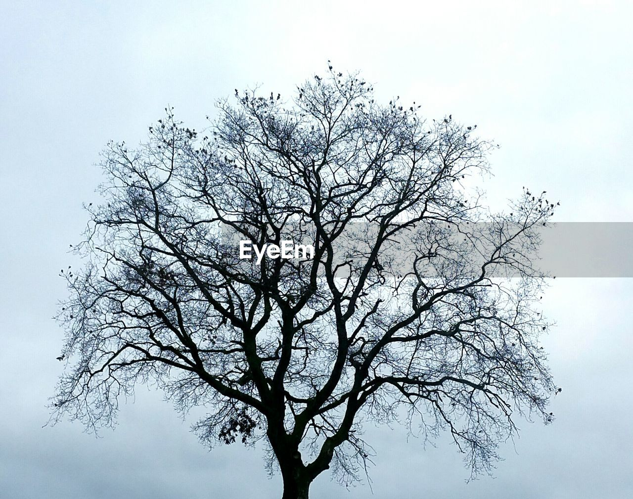 nature, tree, branch, sky, bare tree, beauty in nature, low angle view, tranquility, outdoors, no people, height, high, day