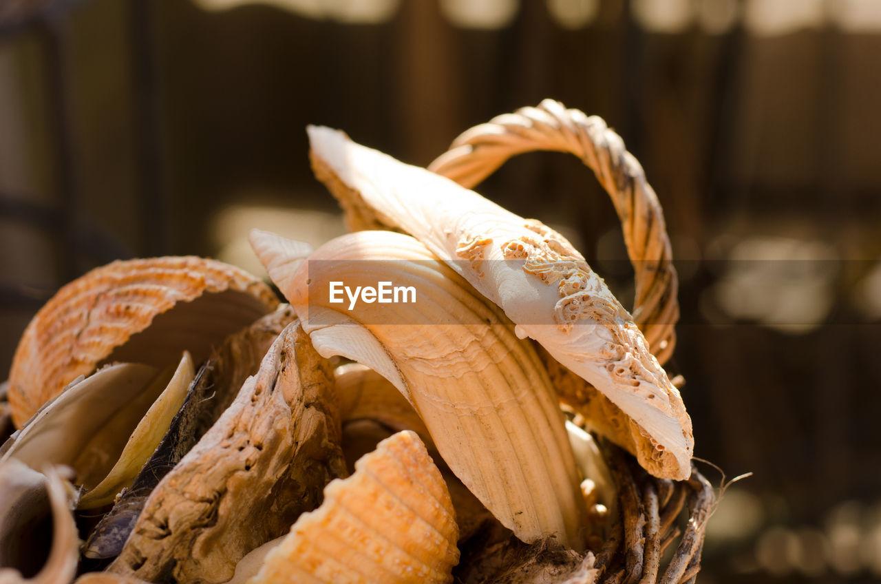 Close up of seashells and edible mushrooms