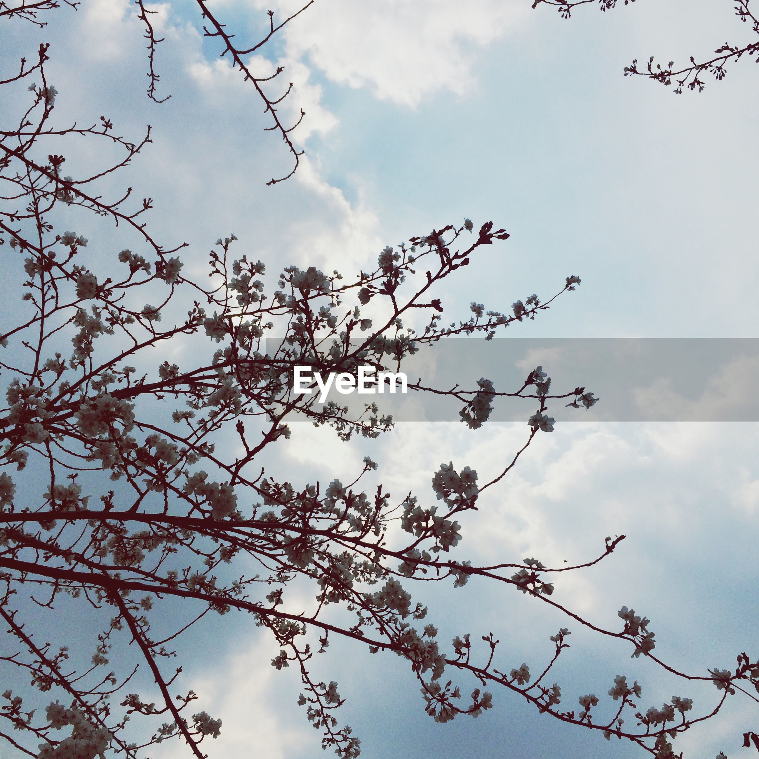 low angle view, branch, sky, tree, cloud - sky, nature, growth, beauty in nature, cloud, cloudy, tranquility, bare tree, outdoors, day, twig, high section, leaf, no people, scenics, overcast