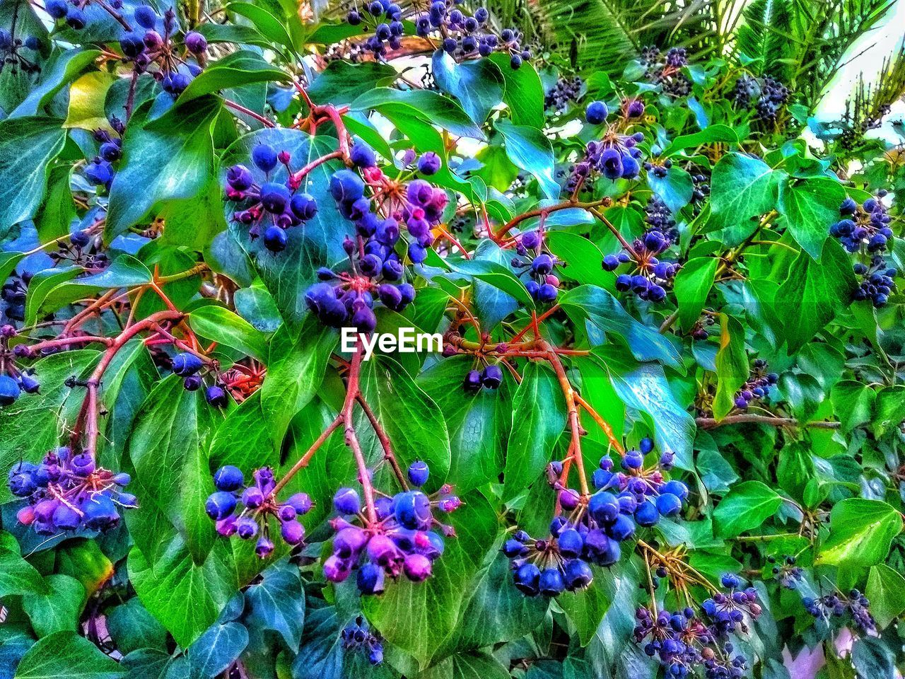 growth, purple, flower, nature, plant, beauty in nature, outdoors, leaf, day, no people, green color, blue, fragility, freshness, tree, flower head, close-up