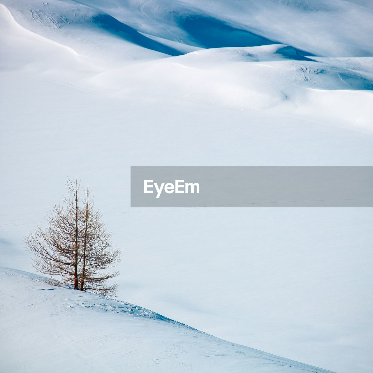 Bare Tree Of Snow Covered Field During Winter