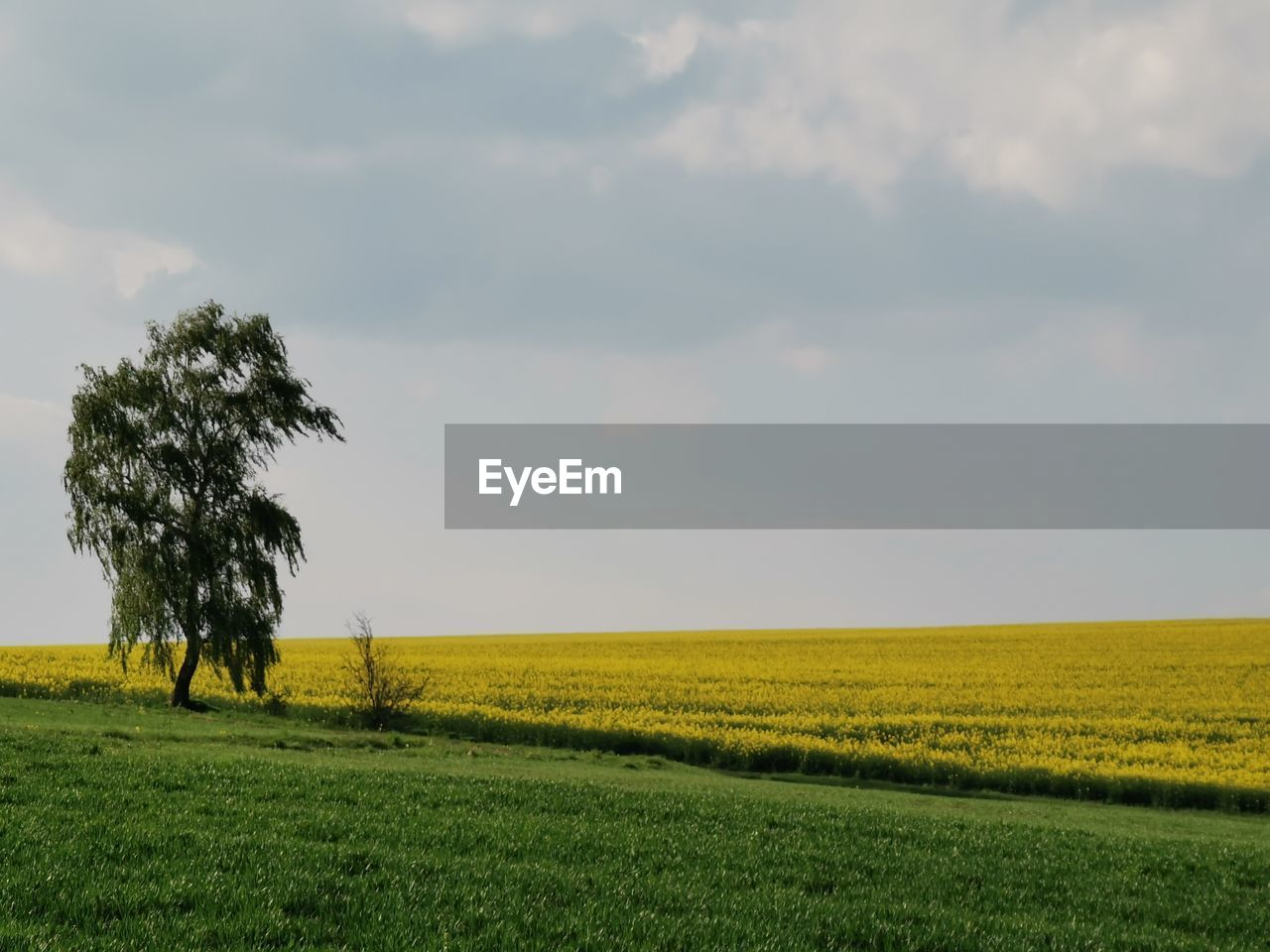 landscape, environment, field, land, sky, plant, beauty in nature, tranquil scene, tranquility, scenics - nature, growth, cloud - sky, agriculture, rural scene, horizon, nature, tree, horizon over land, grass, crop, no people, outdoors