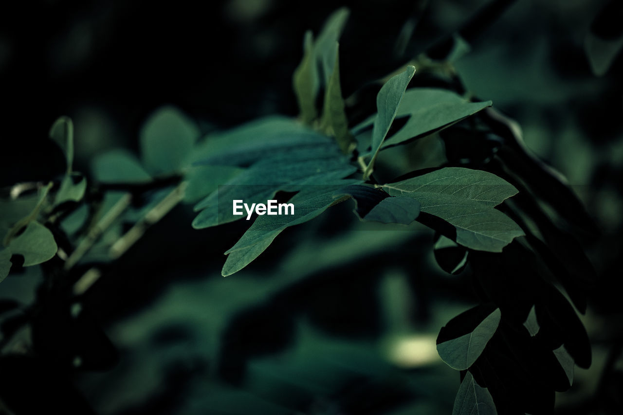 leaf, plant, no people, growth, close-up, green color, nature, day, outdoors, beauty in nature, fragility, freshness