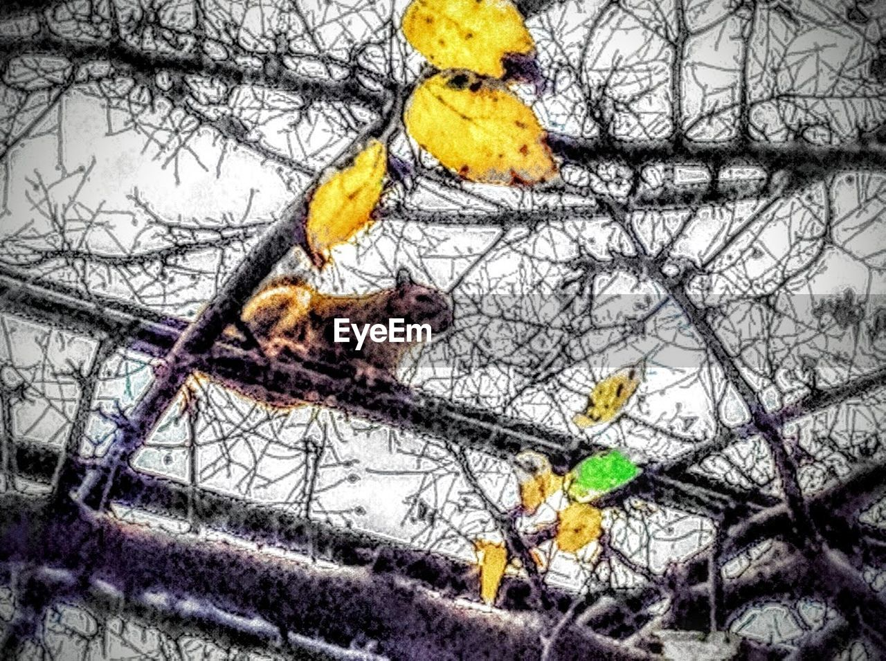 branch, bare tree, tree, yellow, animal themes, low angle view, nature, no people, winter, hanging, outdoors, day, bird, perching, close-up, sky