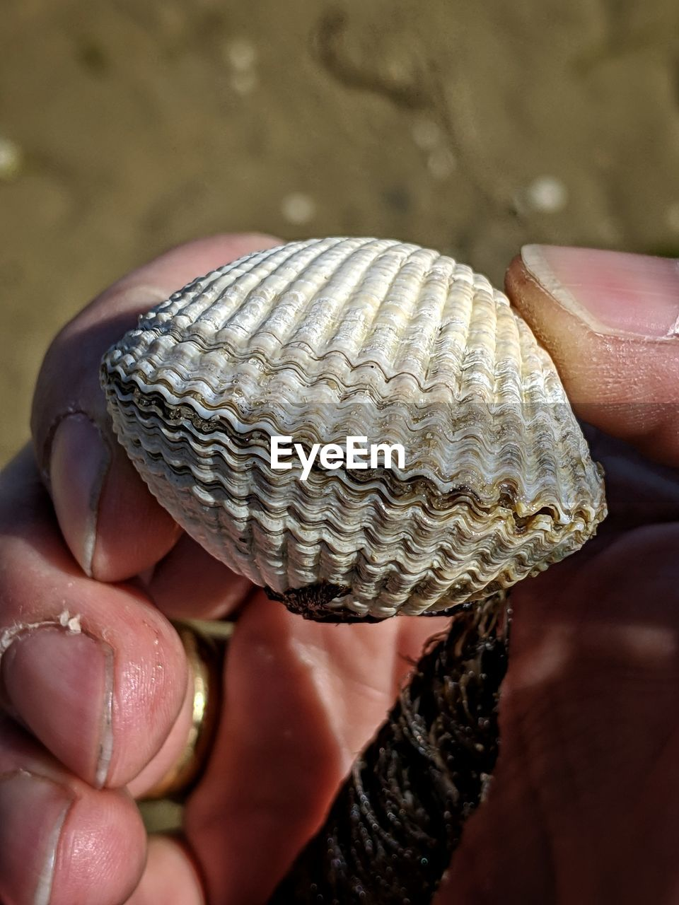 human hand, hand, human body part, one person, holding, real people, close-up, finger, human finger, focus on foreground, unrecognizable person, animal wildlife, body part, lifestyles, animal shell, shell, leisure activity, outdoors, nail