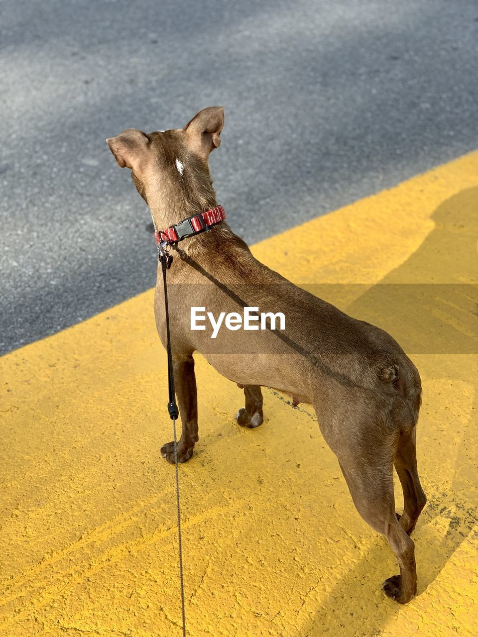 HIGH ANGLE VIEW OF A DOG ON ROAD