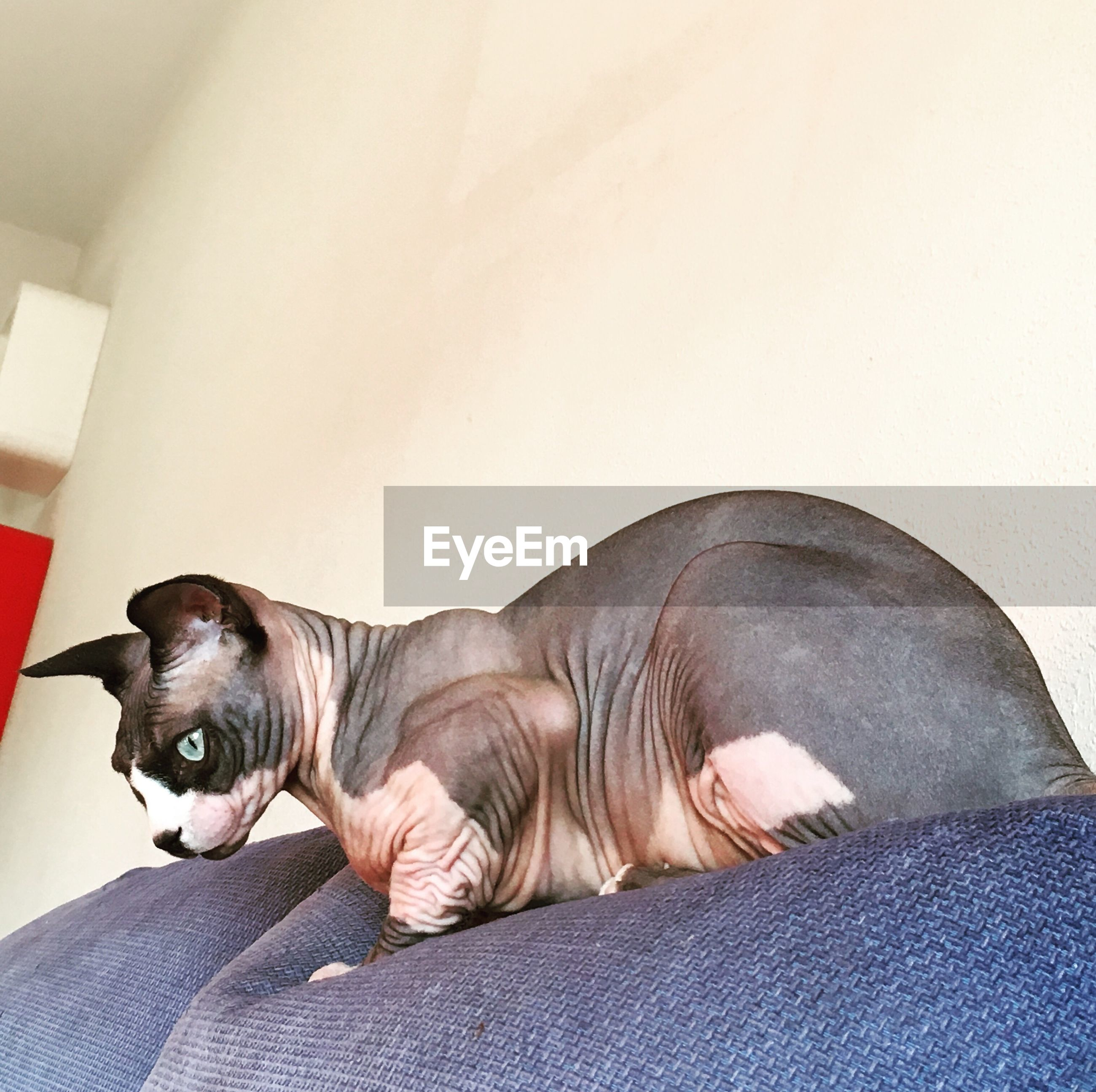 pets, one animal, animal themes, domestic animals, mammal, dog, lying down, indoors, relaxation, home interior, no people, day, close-up