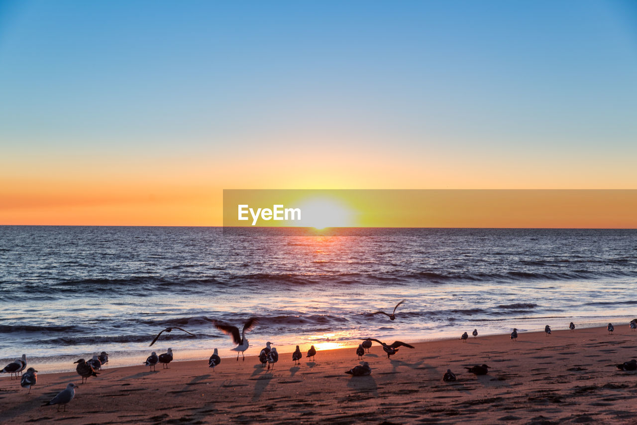 sea, sky, water, sunset, beach, horizon over water, horizon, land, scenics - nature, beauty in nature, sun, clear sky, nature, orange color, tranquility, tranquil scene, idyllic, sand, wave, no people, outdoors, bright