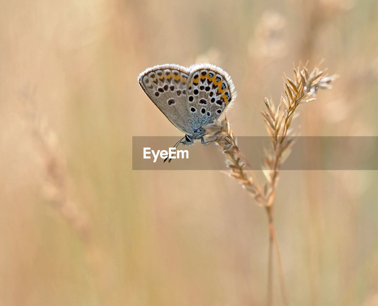 animal, animal themes, animals in the wild, animal wildlife, insect, one animal, invertebrate, close-up, plant, focus on foreground, nature, animal wing, day, beauty in nature, butterfly - insect, no people, selective focus, flower, outdoors, plant stem, butterfly, pollination