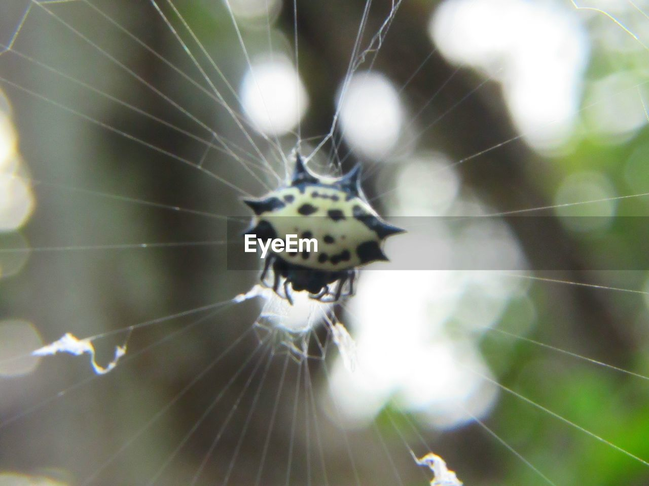 spider web, one animal, animal, animal themes, close-up, animals in the wild, fragility, focus on foreground, invertebrate, day, animal wildlife, insect, no people, nature, vulnerability, selective focus, beauty in nature, arachnid, arthropod, outdoors, web, butterfly - insect