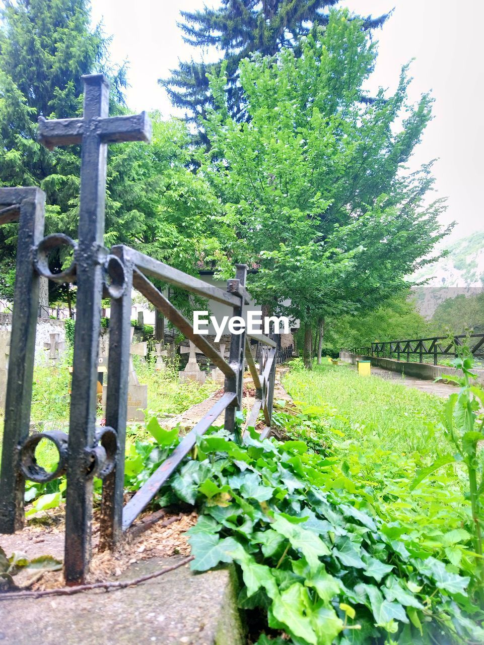 plant, tree, green color, nature, day, fence, boundary, growth, barrier, no people, architecture, metal, gate, outdoors, built structure, security, safety, protection, land, religion, iron - metal