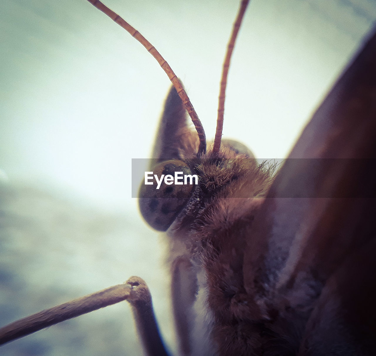 animal themes, one animal, animal, animal wildlife, animals in the wild, invertebrate, close-up, insect, animal body part, no people, selective focus, nature, day, focus on foreground, animal antenna, extreme close-up, outdoors, zoology, macro, brown, animal wing, animal eye, animal head