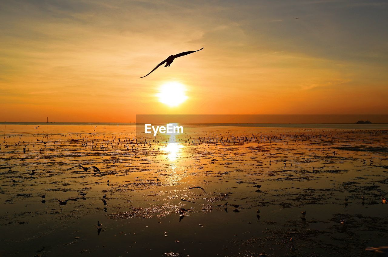 sunset, bird, sky, animal themes, vertebrate, animal, water, animals in the wild, animal wildlife, beauty in nature, orange color, flying, sea, scenics - nature, silhouette, reflection, mid-air, one animal, horizon over water, no people, sun, outdoors