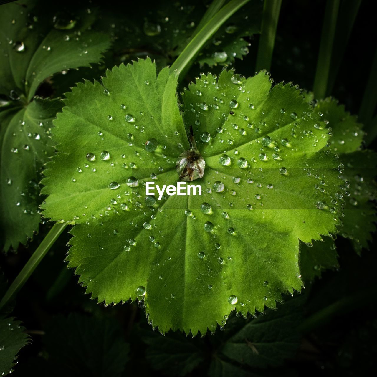 leaf, drop, green color, water, nature, growth, wet, no people, plant, close-up, outdoors, one animal, raindrop, day, animal themes, freshness, fragility, beauty in nature
