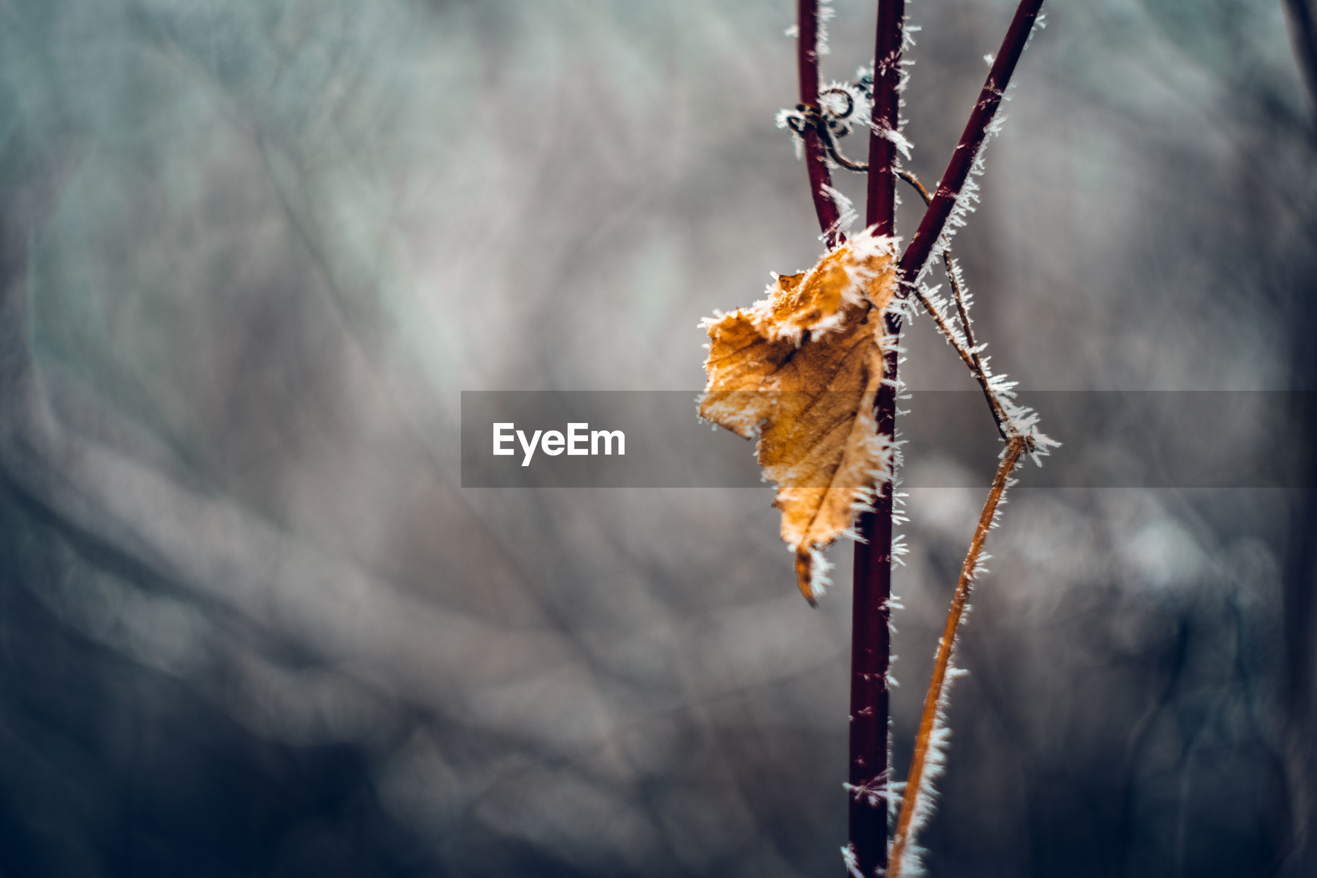 plant, close-up, nature, winter, no people, focus on foreground, cold temperature, beauty in nature, day, leaf, plant part, outdoors, fragility, vulnerability, ice, frozen, change, dry, tranquility, leaves, wilted plant