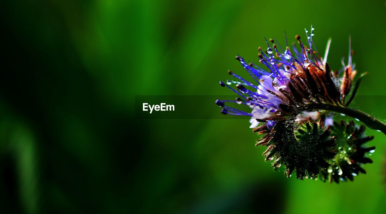 flowering plant, flower, plant, purple, growth, close-up, vulnerability, beauty in nature, fragility, flower head, freshness, petal, inflorescence, focus on foreground, nature, no people, one animal, day, animal wildlife, animal themes, pollen, pollination