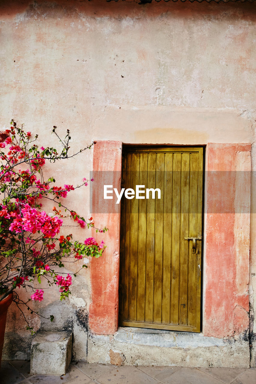 plant, flowering plant, flower, built structure, architecture, building exterior, no people, wall - building feature, growth, day, nature, entrance, house, potted plant, fragility, building, wood - material, door, outdoors, vulnerability, pink color, flower pot, window box