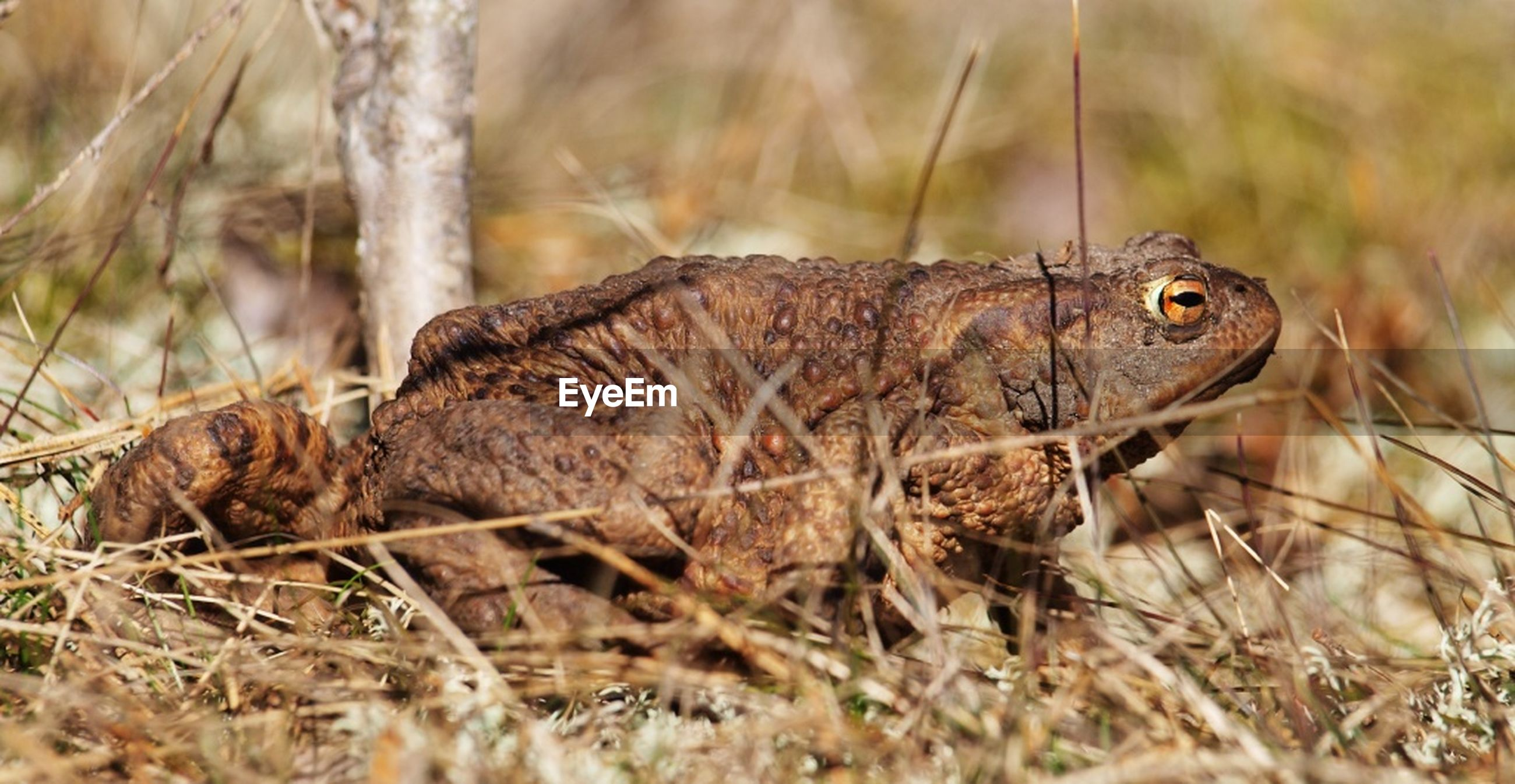 animal themes, one animal, animals in the wild, wildlife, mammal, side view, forest, focus on foreground, animal head, field, reptile, nature, zoology, squirrel, close-up, selective focus, lizard, day, outdoors, no people