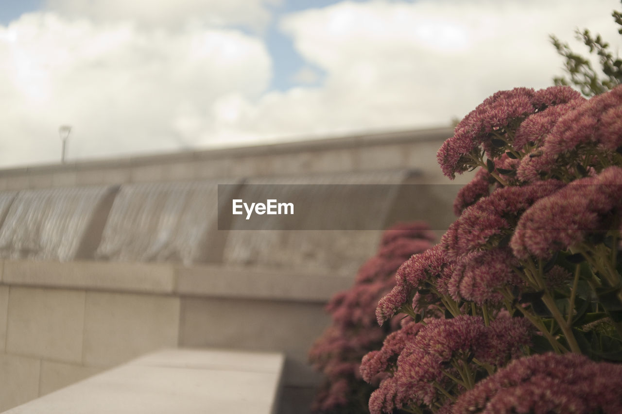 focus on foreground, outdoors, no people, nature, sky, day, freshness, beauty in nature, growth, flower, close-up