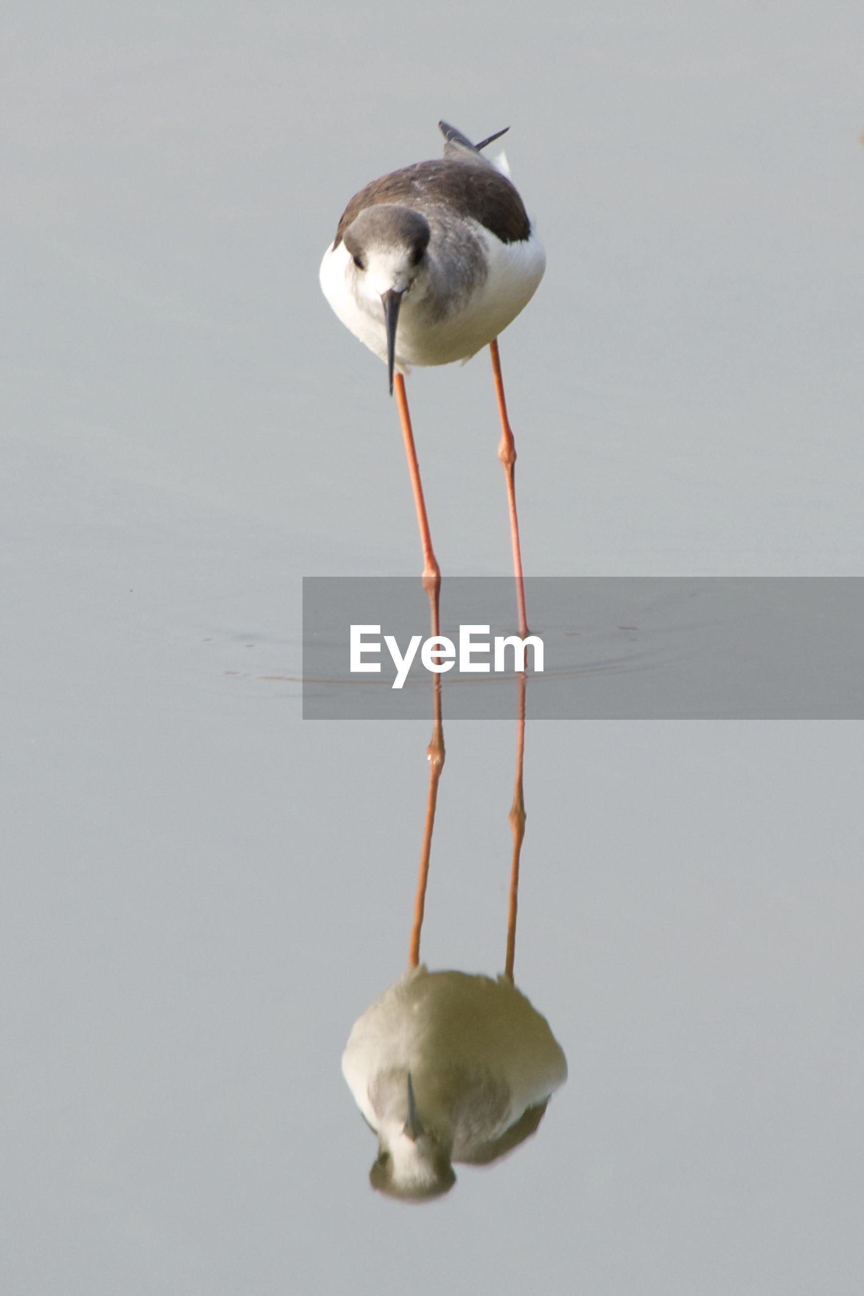 Bird on calm lake