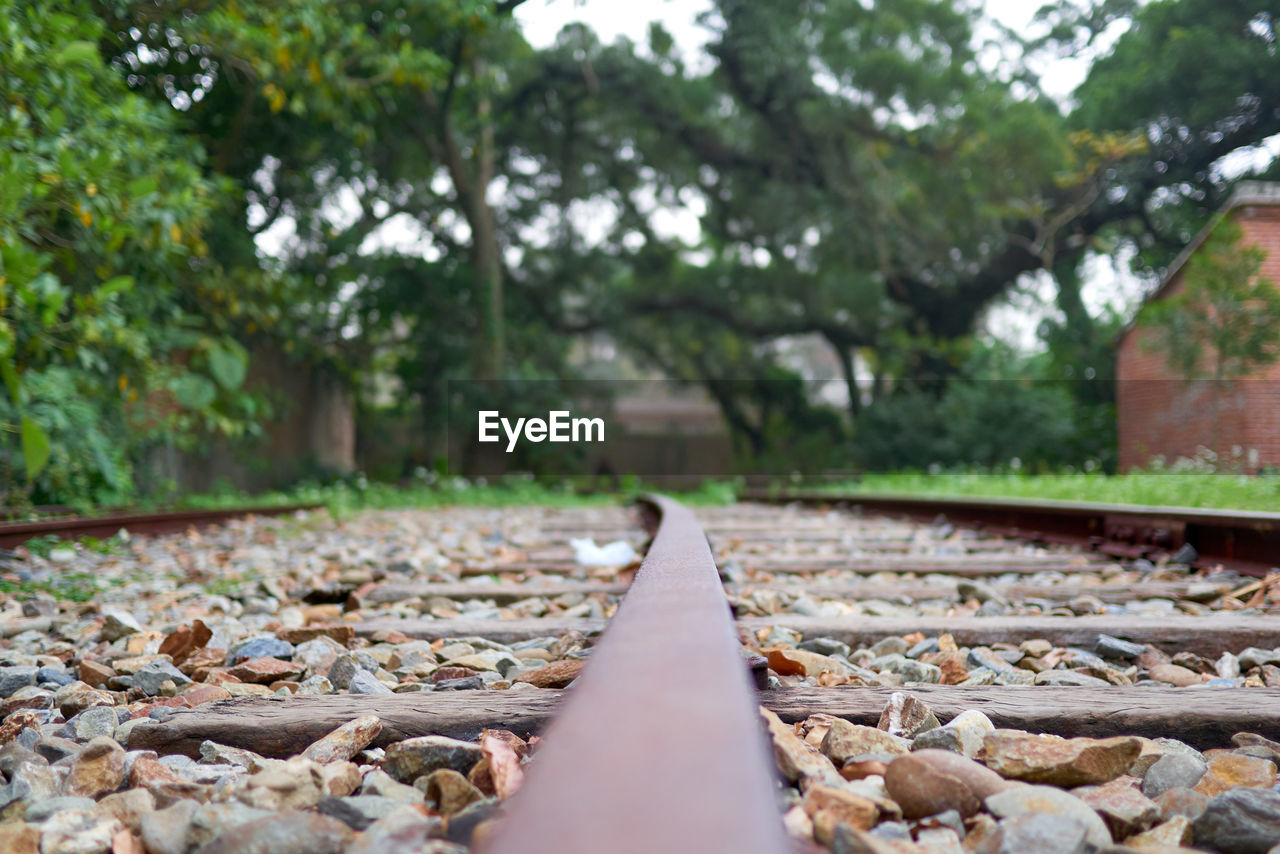 tree, railroad track, track, rail transportation, plant, day, transportation, nature, selective focus, the way forward, direction, diminishing perspective, metal, surface level, outdoors, close-up, growth, no people, leaf, plant part, gravel