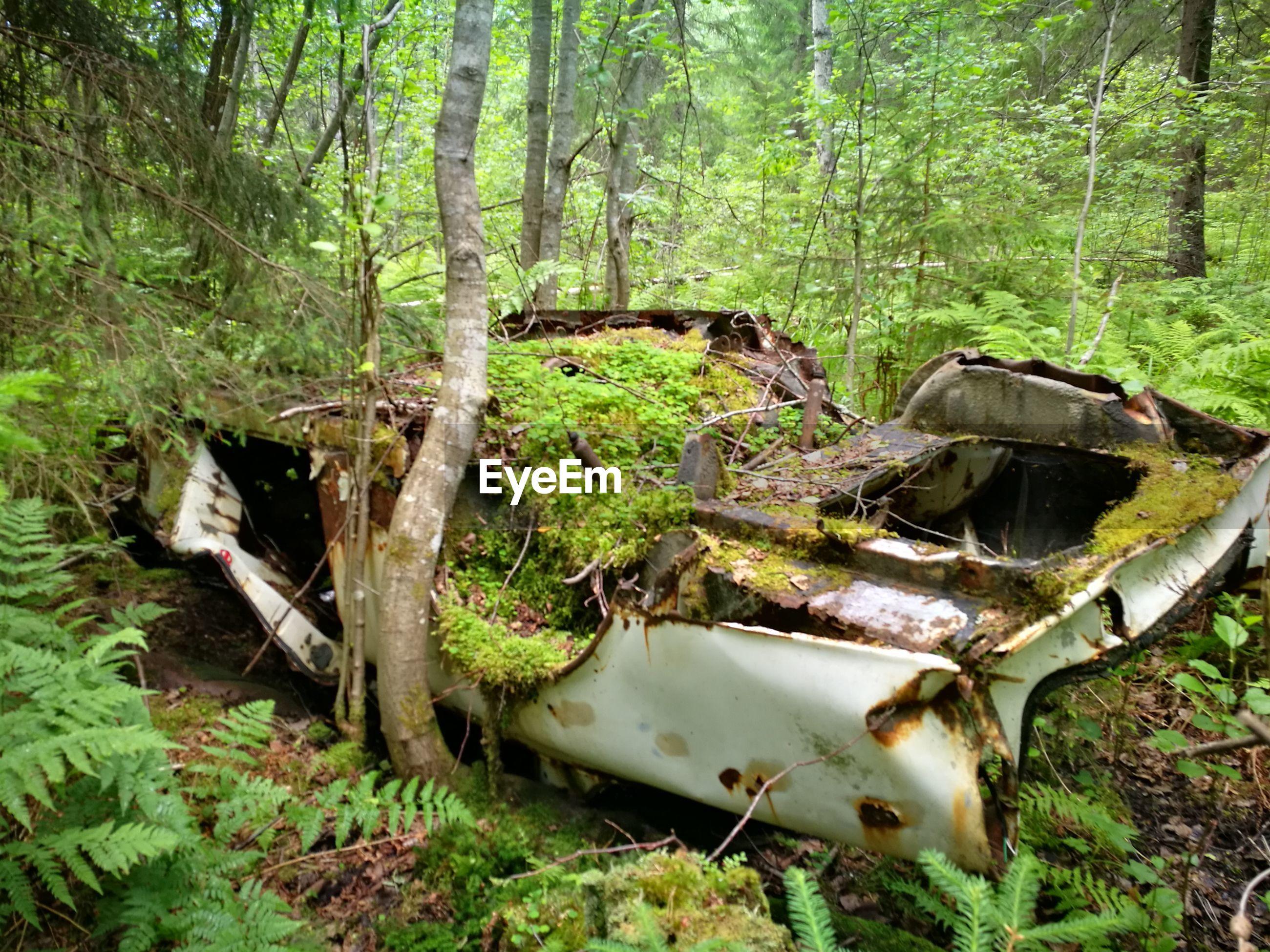 ABANDONED TREE TRUNK