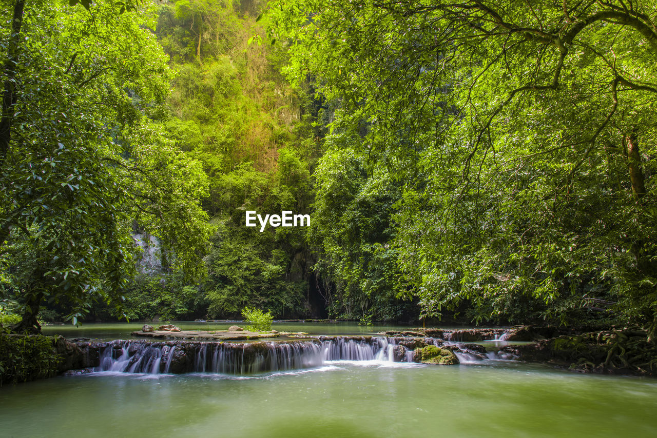 tree, water, plant, forest, green color, nature, beauty in nature, scenics - nature, foliage, lush foliage, land, day, tranquility, no people, motion, long exposure, growth, tranquil scene, waterfall, flowing water, outdoors, flowing, woodland, rainforest, power in nature