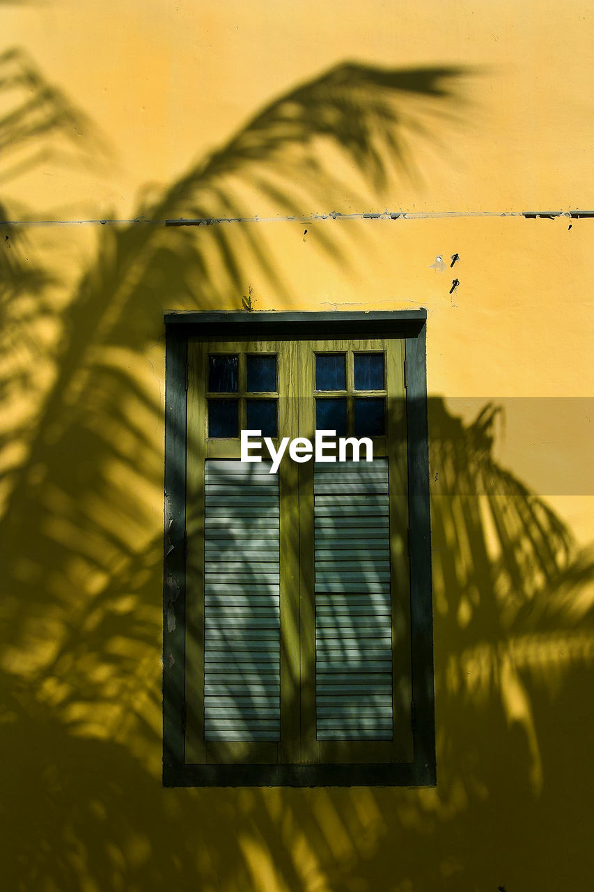Shadow Of Fern On Yellow Wall