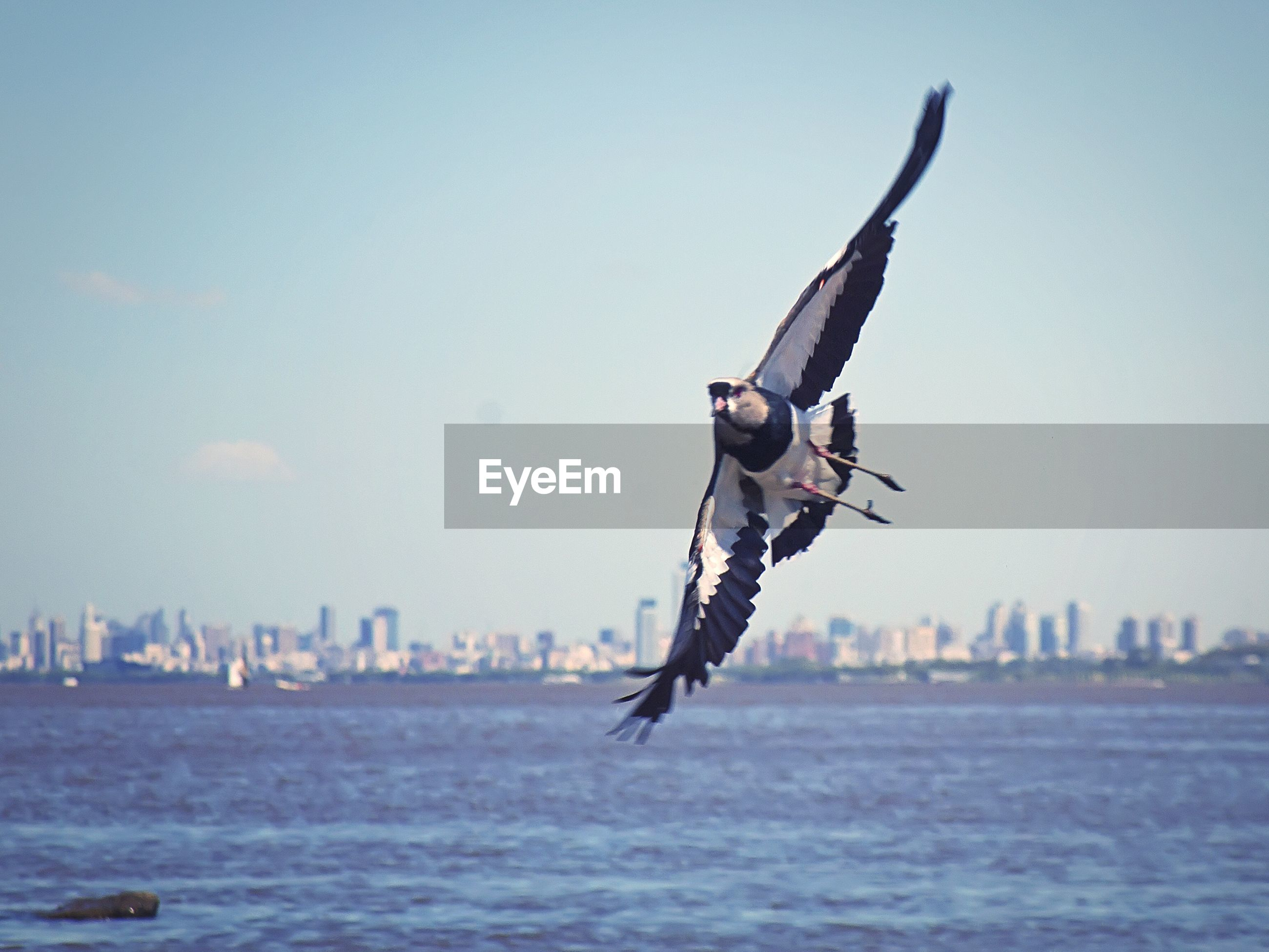 Low angle view of bird flying above sea
