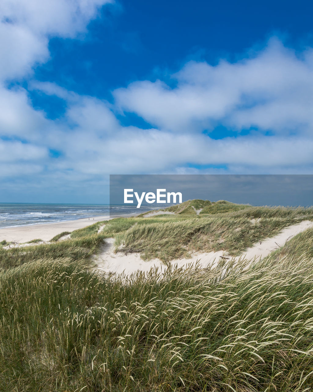 cloud - sky, beauty in nature, sky, scenics - nature, water, sea, tranquility, land, plant, beach, tranquil scene, grass, nature, growth, day, no people, non-urban scene, marram grass, sand, horizon over water, outdoors