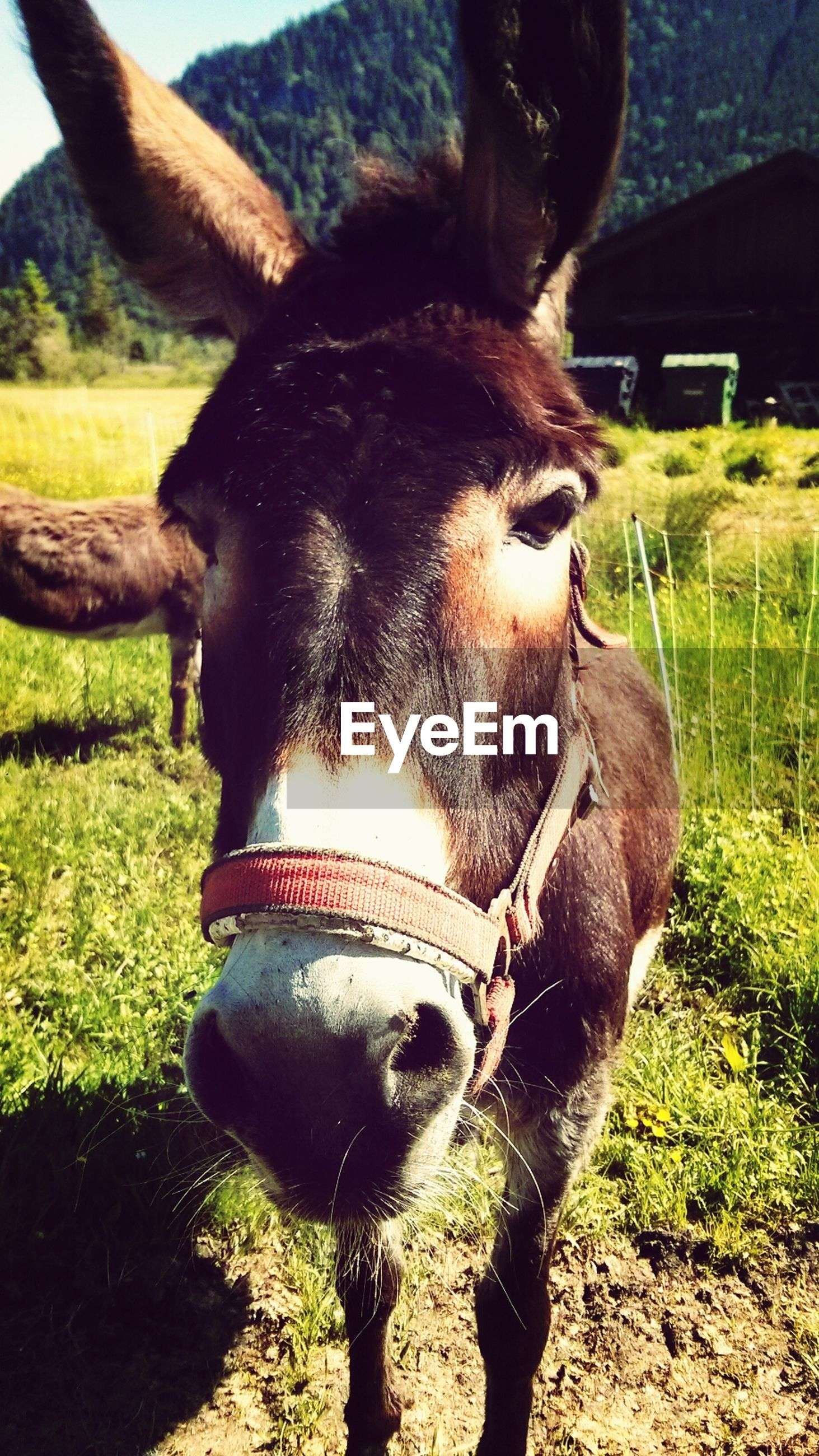 Portrait of donkey on field
