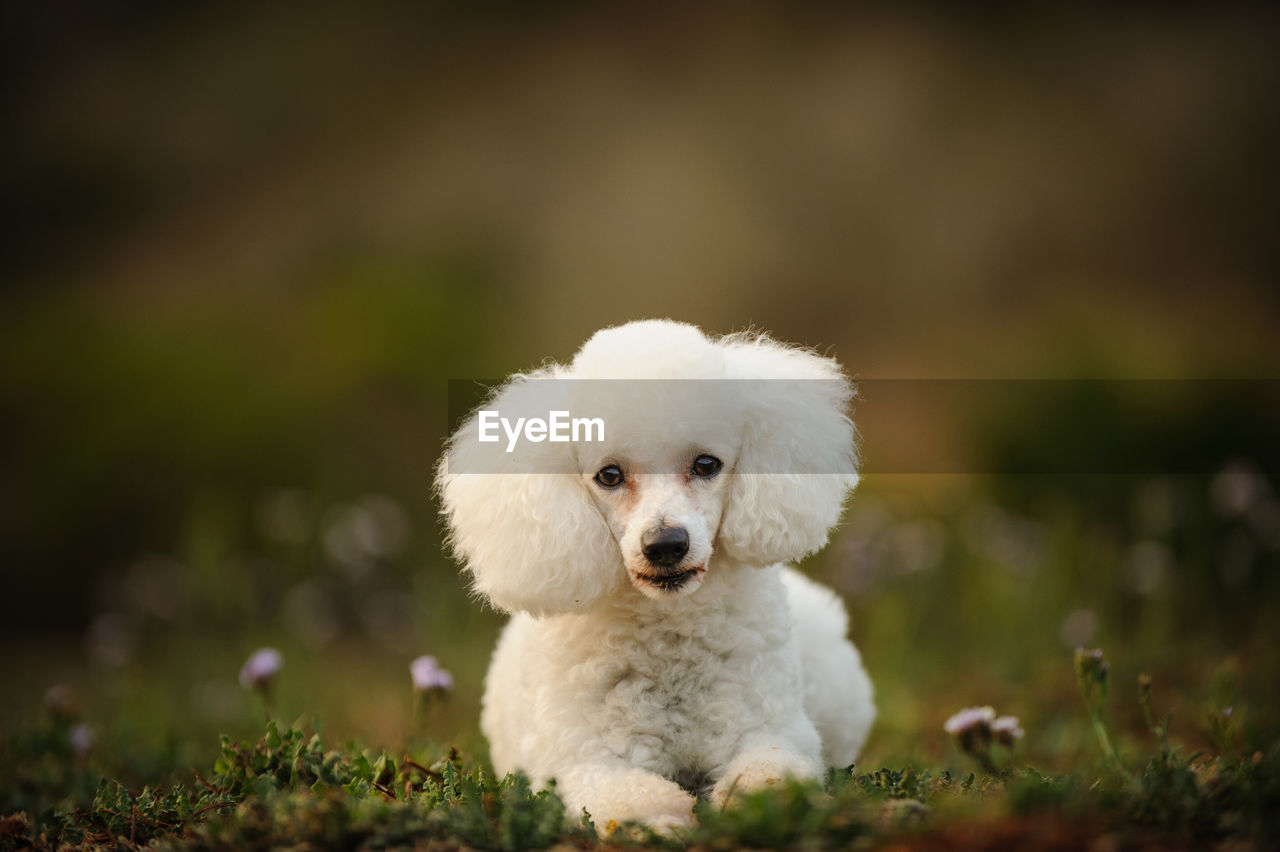 domestic, mammal, one animal, domestic animals, dog, animal themes, canine, pets, animal, looking at camera, portrait, white color, vertebrate, young animal, selective focus, no people, puppy, cute, day, plant, small, animal head