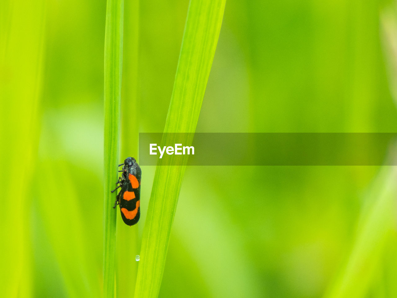 insect, invertebrate, animal wildlife, animal themes, animal, animals in the wild, one animal, green color, plant, close-up, focus on foreground, beauty in nature, no people, nature, ladybug, day, selective focus, growth, beetle, plant part, outdoors, blade of grass, butterfly - insect