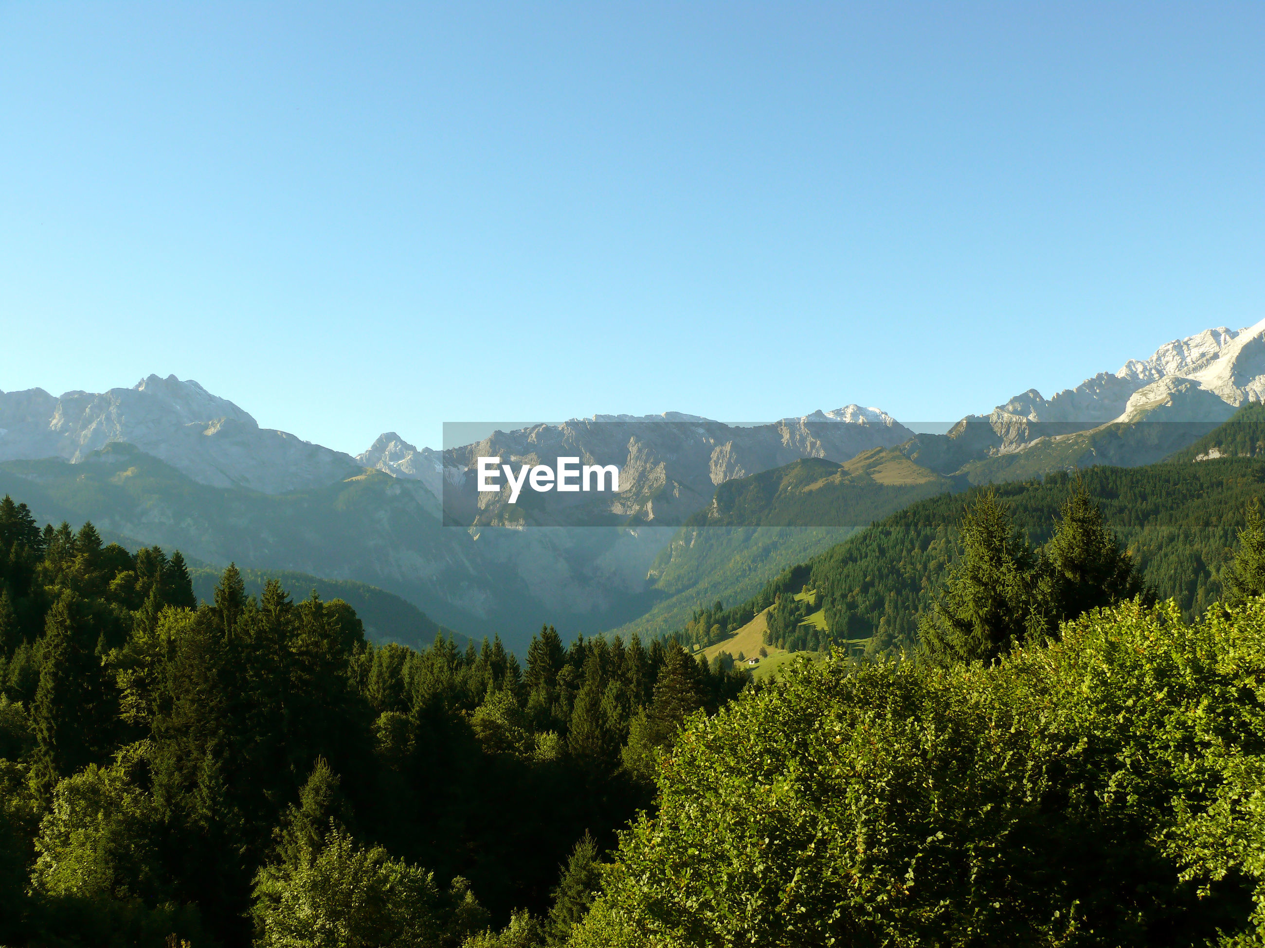Scenic shot of trees on mountain range against clear blue sky