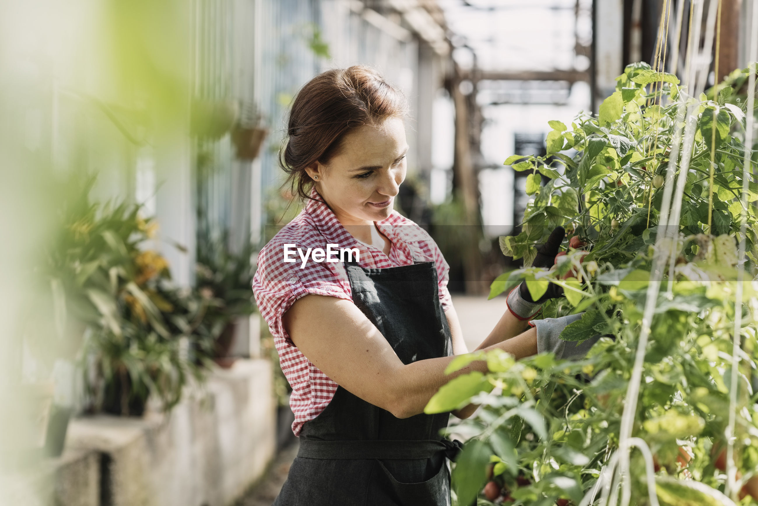 Female gardener working on potted plants in greenhouse