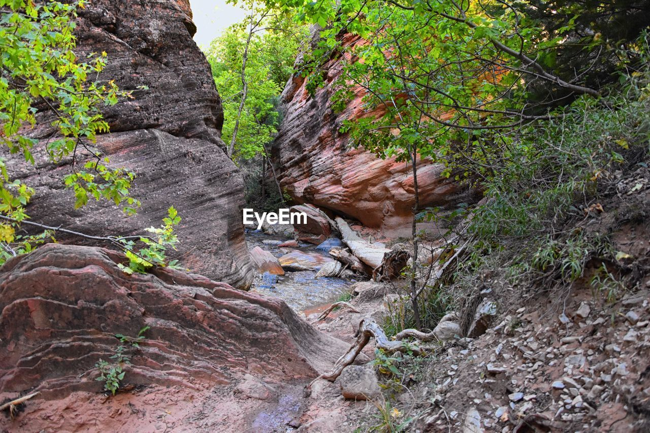 tree, plant, rock, forest, land, nature, rock - object, solid, no people, day, tranquility, growth, beauty in nature, rock formation, non-urban scene, environment, outdoors, tree trunk, trunk, tranquil scene, formation, flowing water