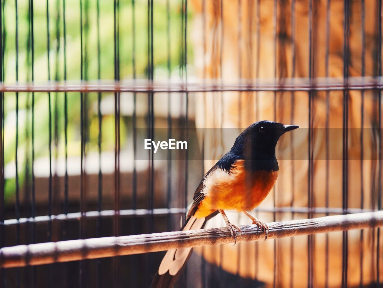 Close-Up Of Robin In Cage