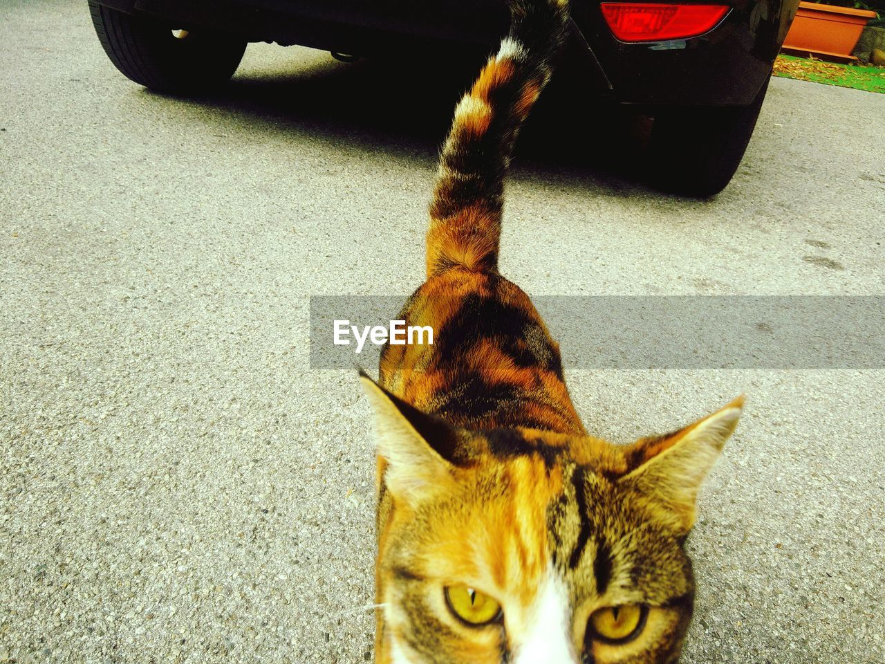High Angle View Of Cat On Street