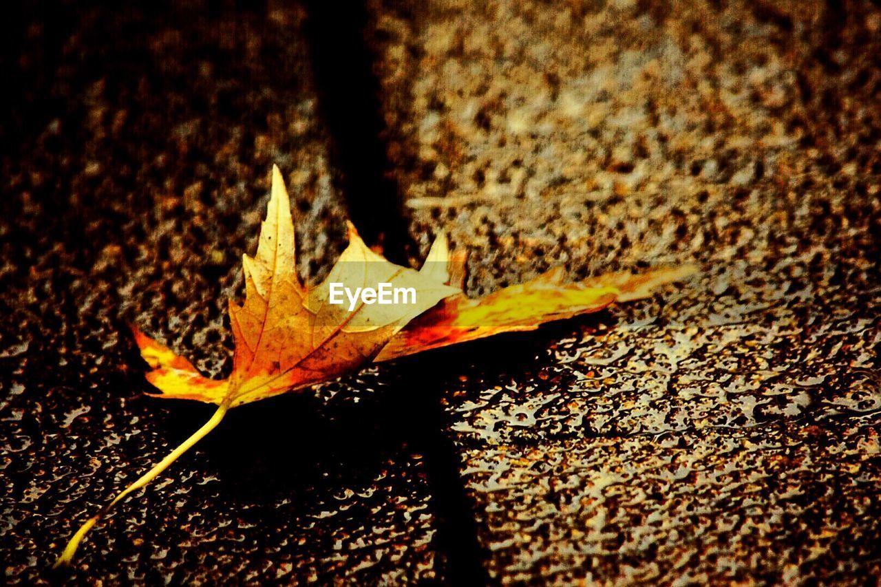 Close-Up Of Leaf On Footpath