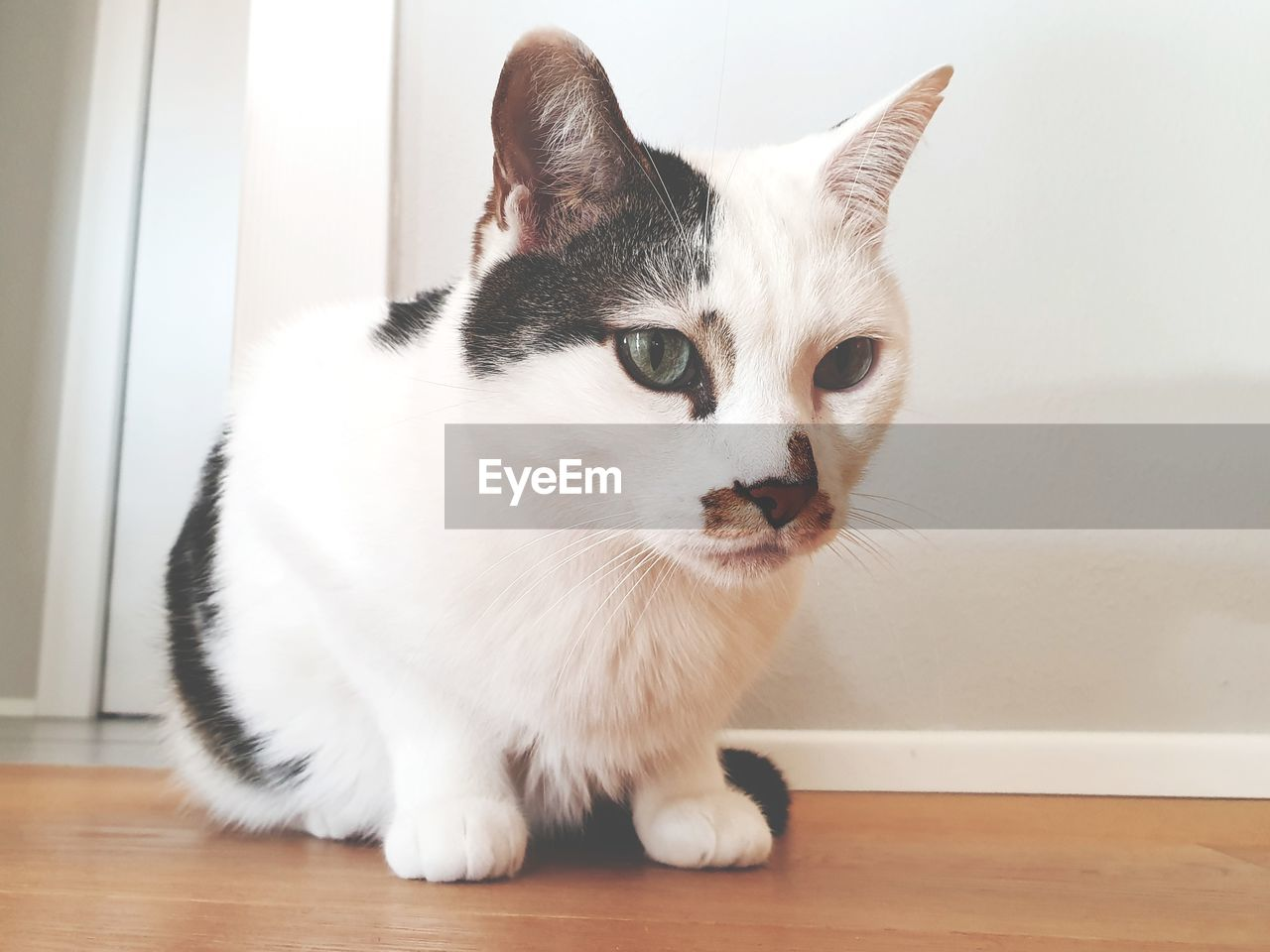 pets, domestic, domestic animals, one animal, animal themes, mammal, domestic cat, cat, animal, feline, vertebrate, indoors, no people, portrait, home interior, whisker, white color, looking, close-up, table