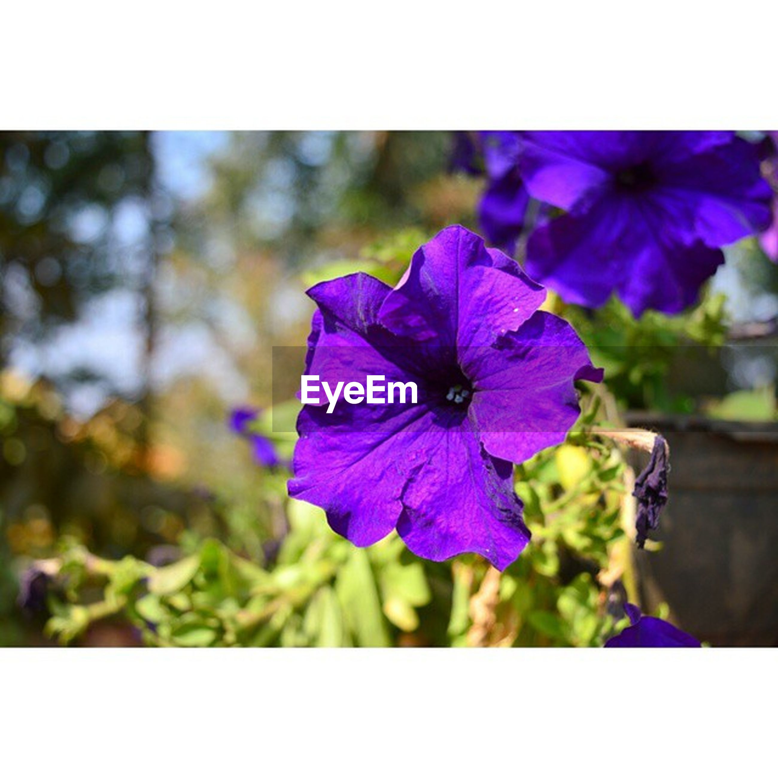 flower, freshness, petal, purple, flower head, fragility, growth, transfer print, beauty in nature, close-up, auto post production filter, blooming, nature, focus on foreground, plant, pollen, in bloom, blossom, stamen, selective focus