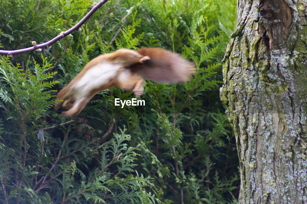 tree, animal themes, one animal, plant, animal, vertebrate, animals in the wild, animal wildlife, no people, motion, mammal, tree trunk, trunk, blurred motion, growth, nature, flying, day, green color, mid-air, outdoors