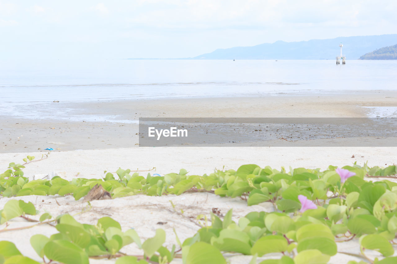 water, sea, beach, beauty in nature, land, plant, nature, sky, tranquility, scenics - nature, tranquil scene, horizon, flower, horizon over water, day, flowering plant, sand, leaf, growth, no people, outdoors