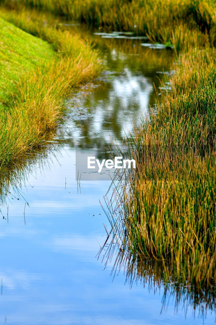 water, plant, reflection, growth, tranquility, nature, no people, green color, grass, beauty in nature, day, lake, waterfront, tranquil scene, outdoors, scenics - nature, land, focus on foreground, tree, swamp