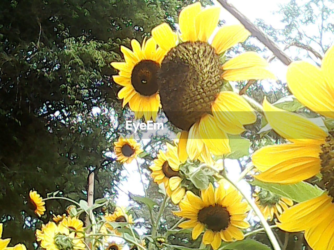 flower, yellow, petal, fragility, nature, flower head, beauty in nature, growth, freshness, sunflower, plant, outdoors, one animal, no people, day, blooming, close-up, animal themes